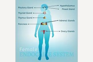 Women Endocrine System