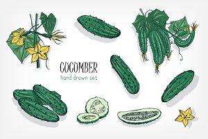 different cucumbers set