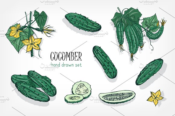 different cucumbers set