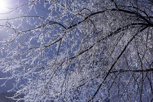 Icy tree branches at night in winter