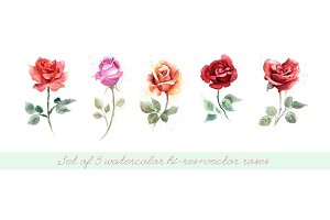 5 watercolor roses