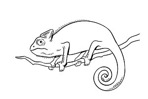 Chameleon animal coloring book vector illustration