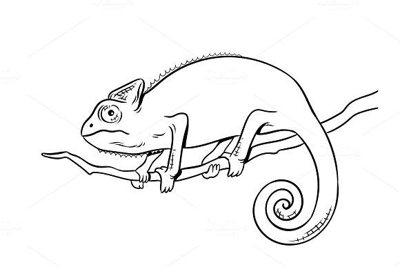 Chameleon animal coloring book vector illustration