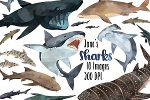 Watercolor Shark Species Clipart