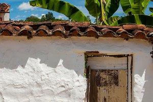 Old White Wall and Banana Tree