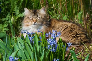 a cat in the flowers