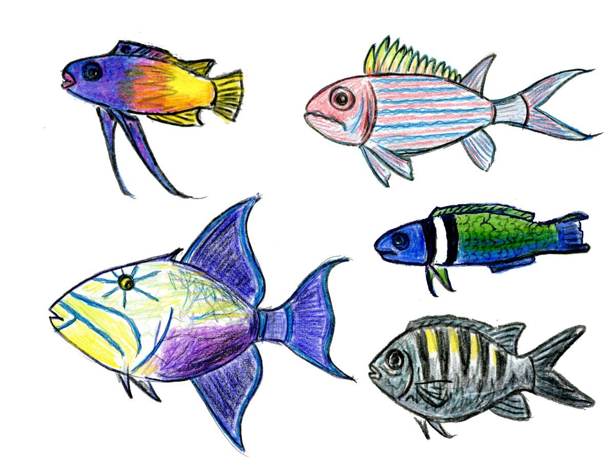 Tropical fish drawings illustrations creative market
