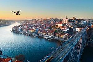 Flying bird, Porto, Portugal