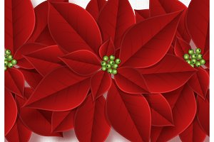 Background decorated with beautiful red buds poinsettia flowers
