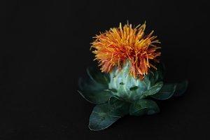 Flower in Macro Shot