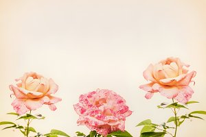 Roses layout in retro sepia style