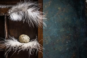 Egg on feathers nest in wooden box
