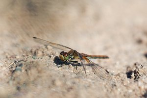Beautiful dragonfly on the sand