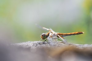 Beautiful dragonfly on the stone.