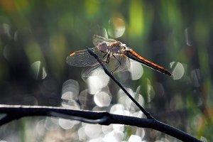 Beautiful dragonfly. Nature, green background bokeh