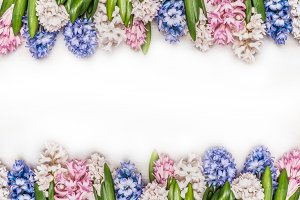 Colorful Hyacinths frame on white