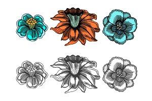 Vintage vector flowers