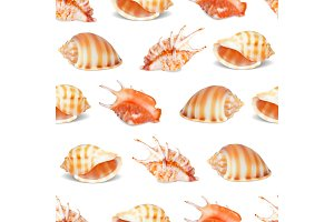 Seashell collection vector illustration.