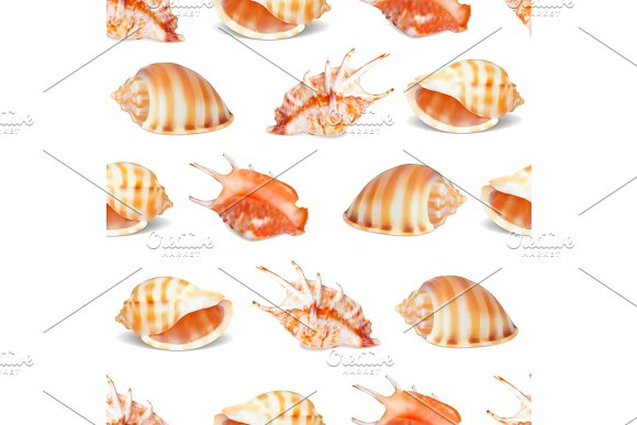 Seashell Collection Vector Illustration