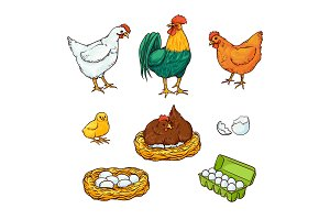 Vector flat poutry, farm chicken set