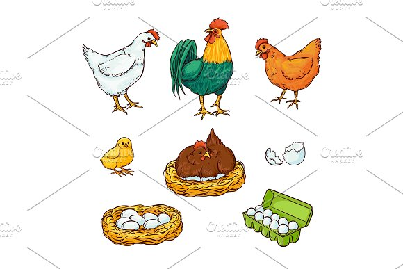 Vector Flat Poutry Farm Chicken Set