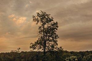 Summer tree against storm