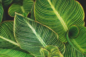 Closeup Of Tropical Canna Leaves High Quality Nature Stock Photos Creative Market Visit me for more tropical footages and photos of bali island and more + timelapses. closeup of tropical canna leaves
