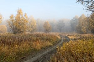 A cold autumn morning in the Siberian forest