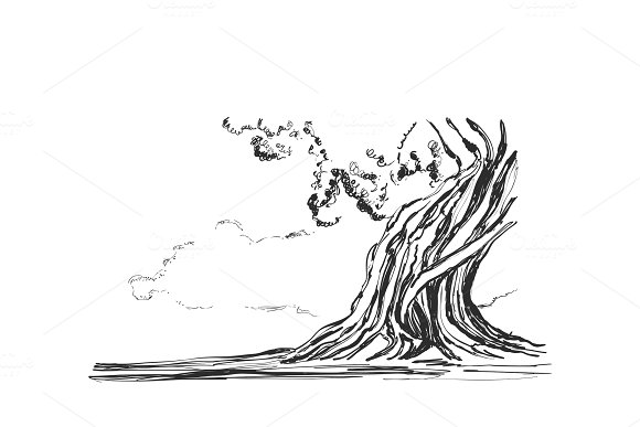 Sketch of old trees. Vector illustration in Illustrations