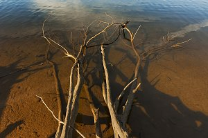 fallen tree at the edge of lake