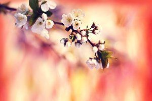 Spring background with blooming tree