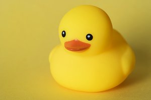 Closeup of rubber duck
