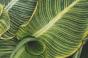 Tropical Leaves Closeup