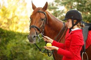 Jockey to feed horse with apple
