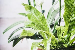 Indoor plant with fern and orchid