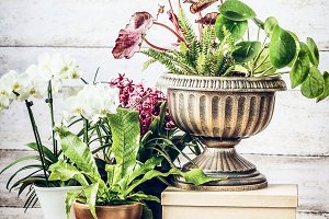 Indoor plants patio pots ideas