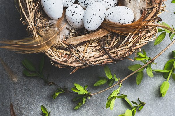 Holiday Stock Photos: VICUSCHKA - Easter eggs in nest with spring twig