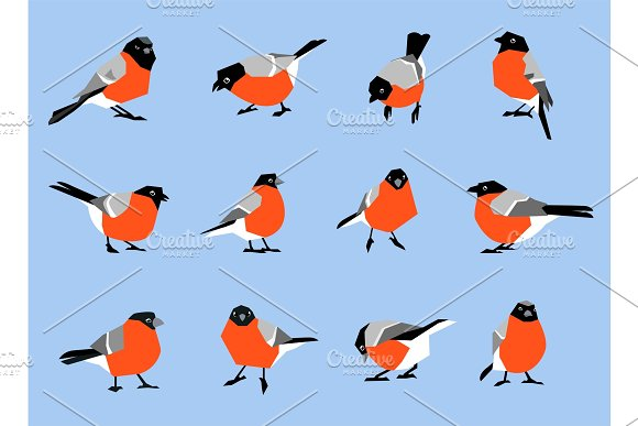 Bullfinches Isolated On White Background