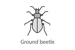 Ground beetle color icon
