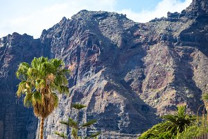High palm on background of Los Gigantes Cliffs, Tenerife, Spain. Arial view