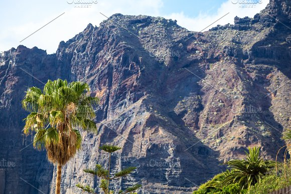 High Palm On Background Of Los Gigantes Cliffs Tenerife Spain Arial View