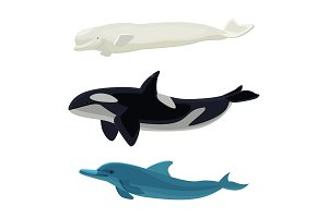 Set of dolphin, killer whales and orca aquatic marine mammals
