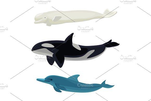 Set Of Dolphin Killer Whales And Orca Aquatic Marine Mammals