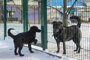 Different breeds of dogs meet through a fence-cage