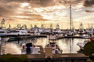 Boats in Marina Pez Vela
