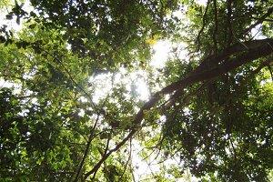 The sun peeks through the treetops