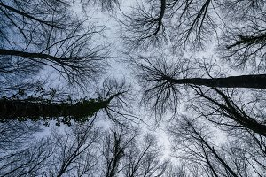 Tree branches seen from below