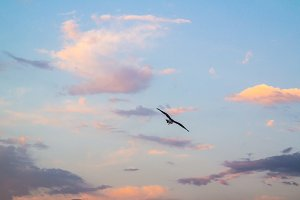 Flying seagull from the back in a colored cloudy sky