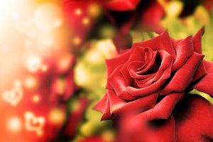 Red rose and heart bokeh