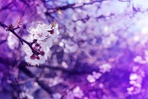 Spring fantastic blooming flowers